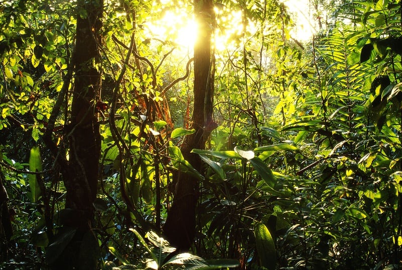 Soberania National Park, Panama --- The sun lights up the rainforest in Soberania National Park, near the Panama Canal. --- Image by © Paul A. Souders/CORBIS